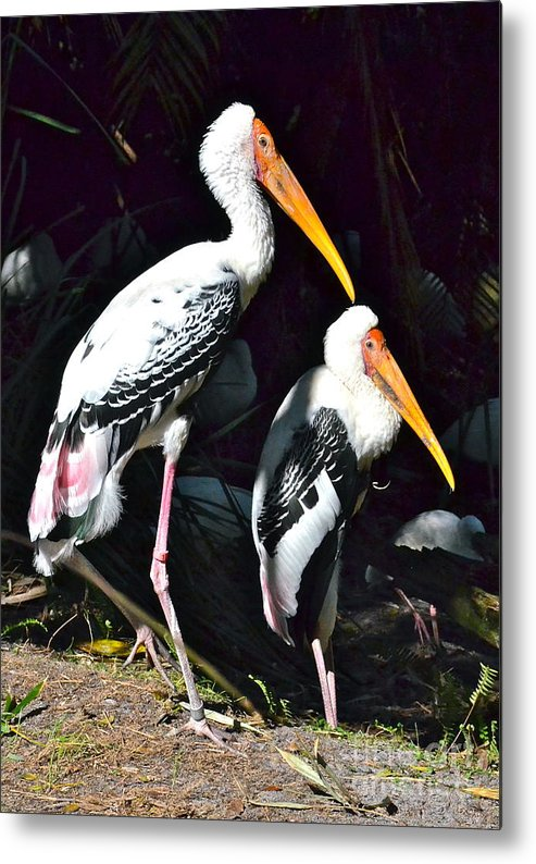 Stork Metal Print featuring the photograph Painted Storks by Carol Bradley