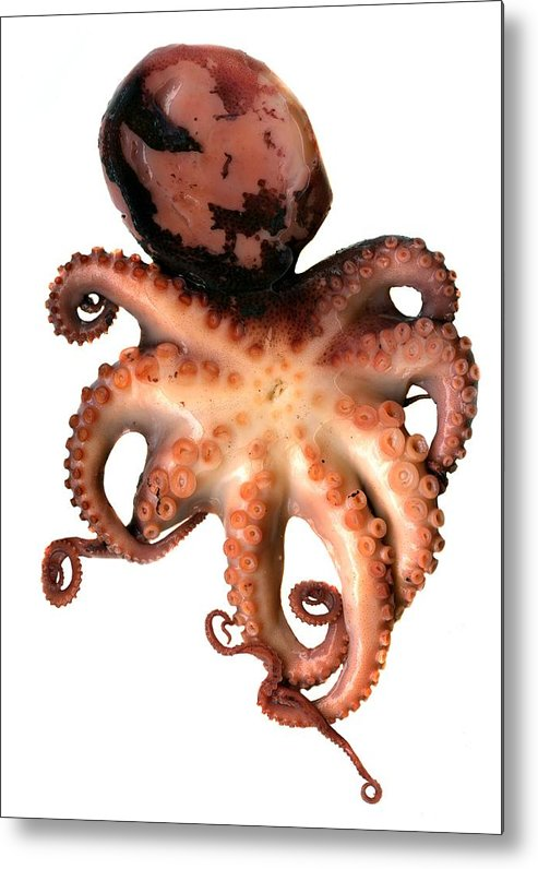 Animal Metal Print featuring the photograph Octopus by Victor Habbick Visions