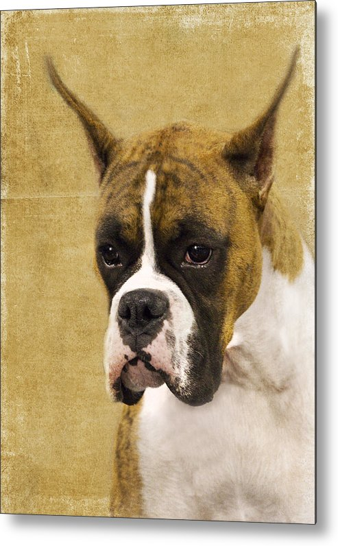Boxer Metal Print featuring the photograph Boxer by Rebecca Cozart