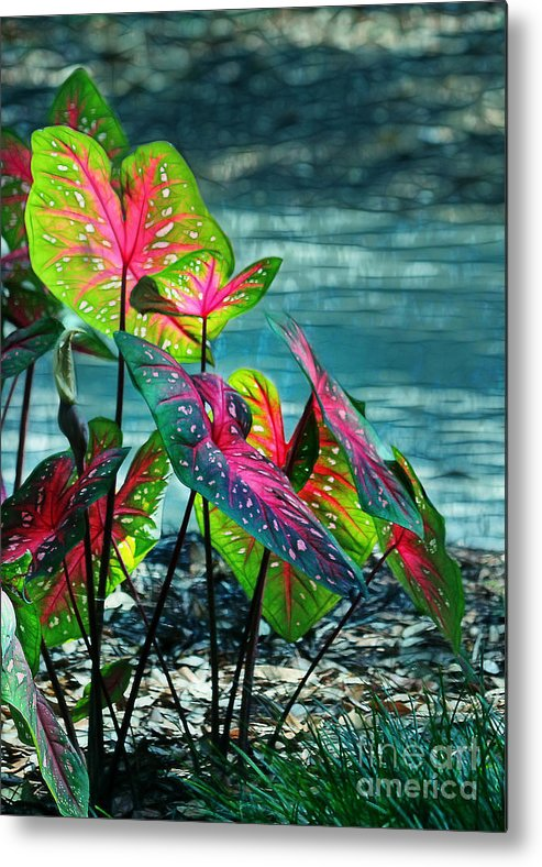 Calladiums Metal Print featuring the photograph Calladiums by Judi Bagwell