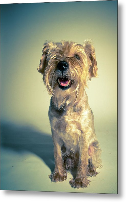 Vertical Metal Print featuring the photograph Cleveland Dog by Square Dog Photography