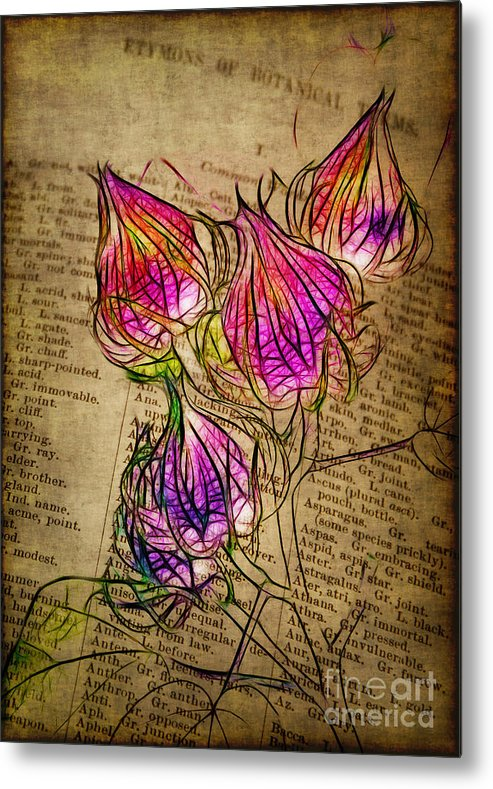 Seedpods Metal Print featuring the photograph Faerie Caps by Judi Bagwell