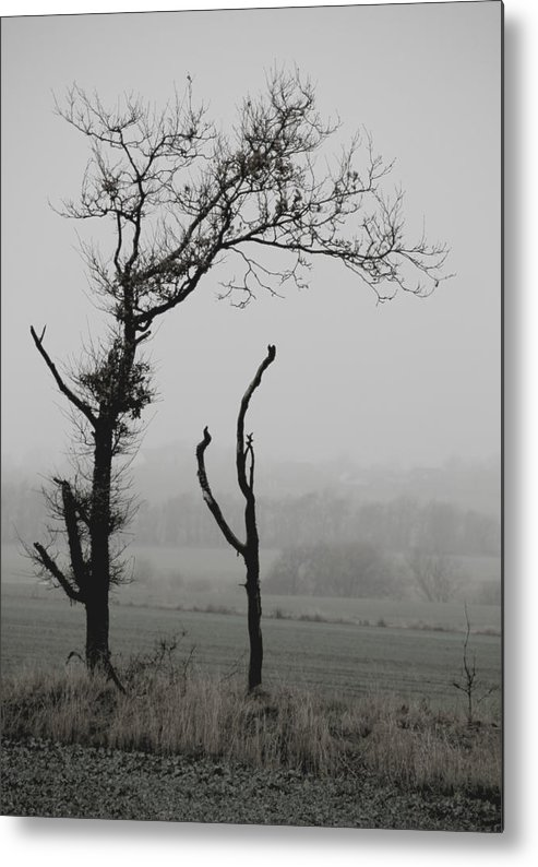 Trees Metal Print featuring the photograph Frail Sentinels by Odd Jeppesen