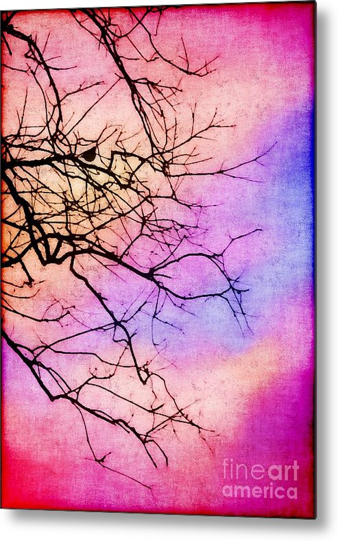 Bird Metal Print featuring the photograph Singing In The Sunshine by Judi Bagwell