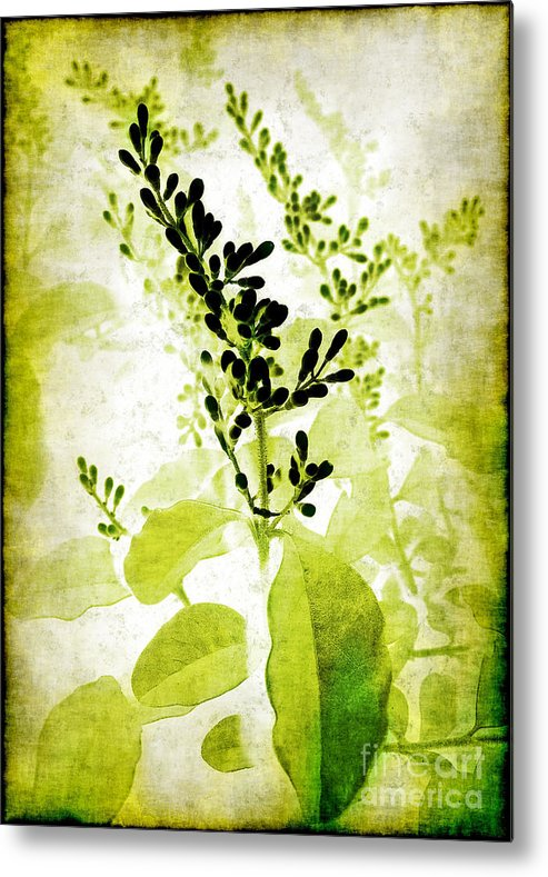 Leaves Metal Print featuring the photograph Study In Green by Judi Bagwell