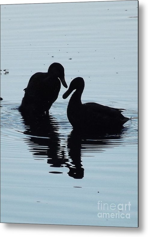 Macro Birds Nature Animals Metal Print featuring the photograph True Love by Pamela Rivera