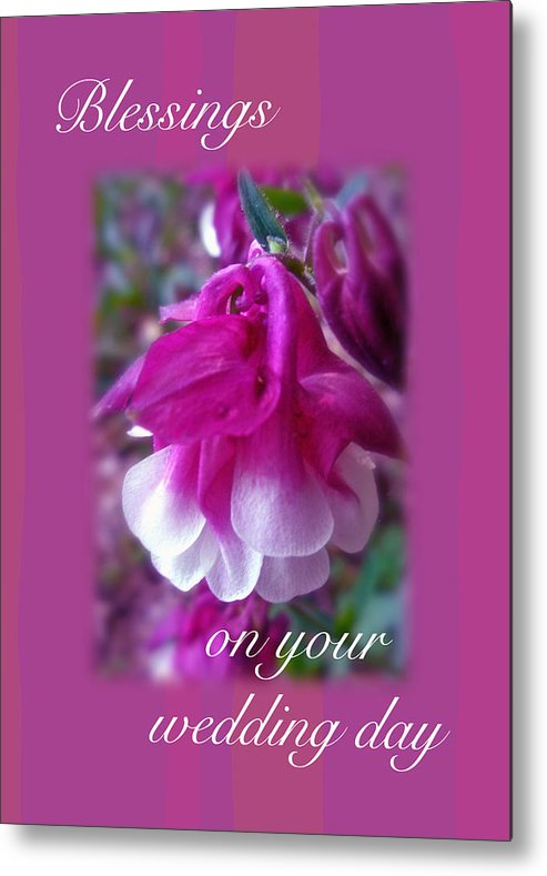 Wedding Metal Print featuring the photograph Wedding Blessings Greeting Card - Columbine Blossom by Mother Nature
