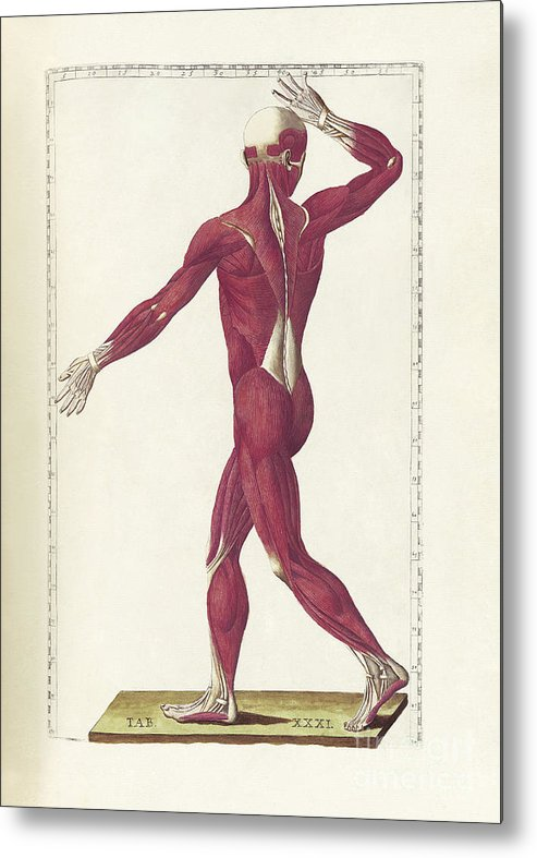 Vertical Metal Print featuring the digital art The Science Of Human Anatomy by National Library of Medicine
