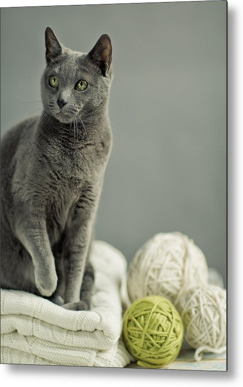 Purebred Metal Print featuring the photograph Russian Blue by Nailia Schwarz