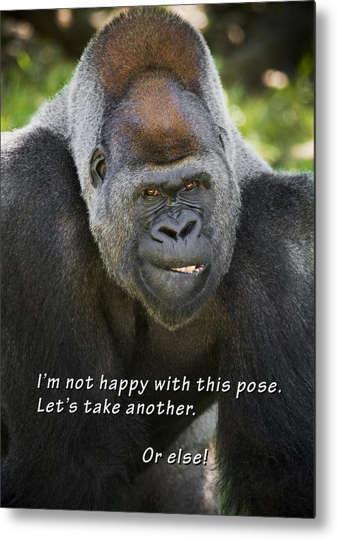 Gorilla Metal Print featuring the photograph Another Pose by Chad Davis