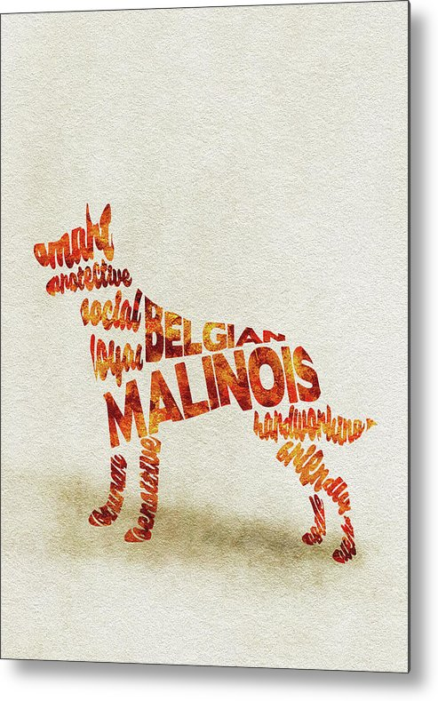 Belgian Metal Print featuring the painting Belgian Malinois Watercolor Painting / Typographic Art by Inspirowl Design