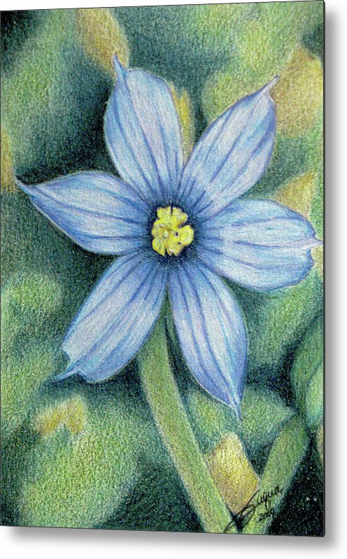 Fuqua - Artwork Metal Print featuring the drawing Blue Eyed Grass - 1 by Beverly Fuqua