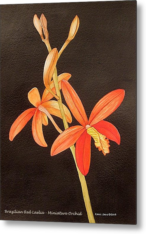 Art Metal Print featuring the painting Brazilian Red Laelia-miniature Orchid by Carol Sabo