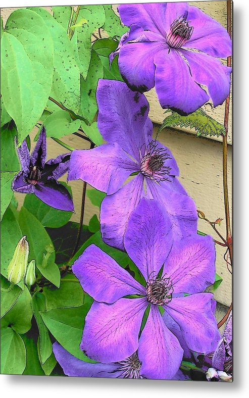 Clematis Metal Print featuring the photograph Clematis Trail by Vijay Sharon Govender