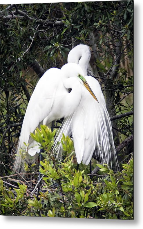 Beaufort County Metal Print featuring the photograph Courting by Phill Doherty