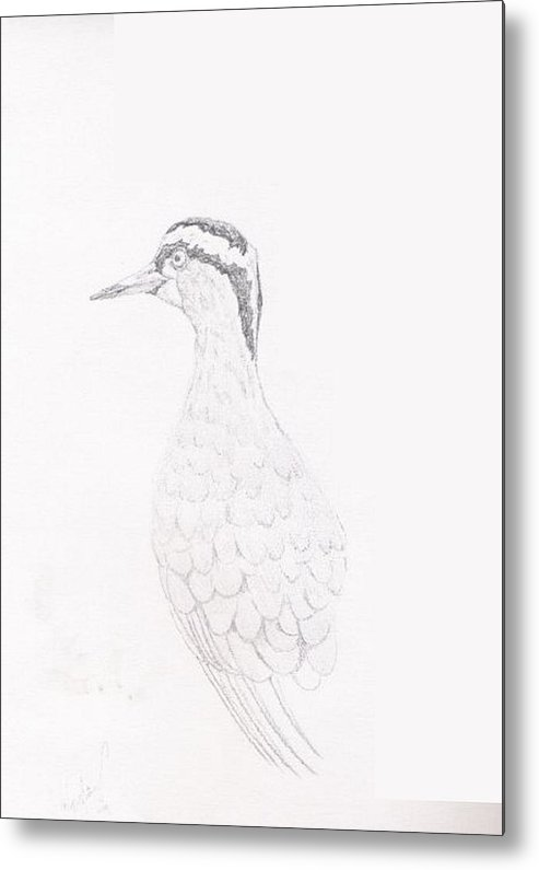 Wildlife Metal Print featuring the drawing Crowned Lapwing by Wayne Monninger