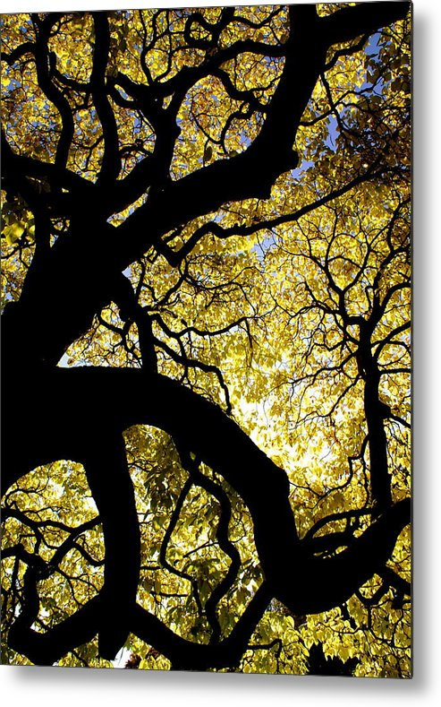 Fall Season Metal Print featuring the photograph Dangerous Curves by Sonja Anderson