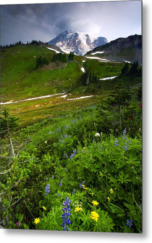 Rainier Metal Print featuring the photograph From The Top by Mike Dawson
