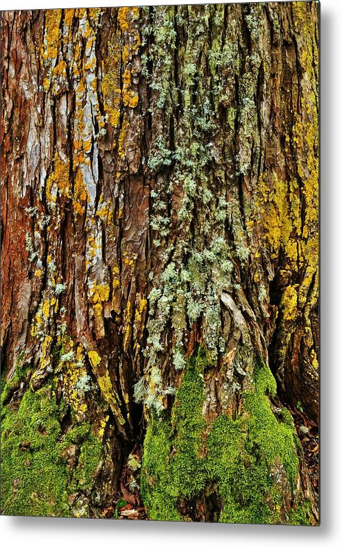 Tree Metal Print featuring the photograph Island Moss by JAMART Photography