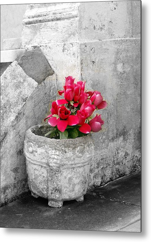 Flowers Metal Print featuring the photograph Layfayette No One Red Roses by Heather S Huston