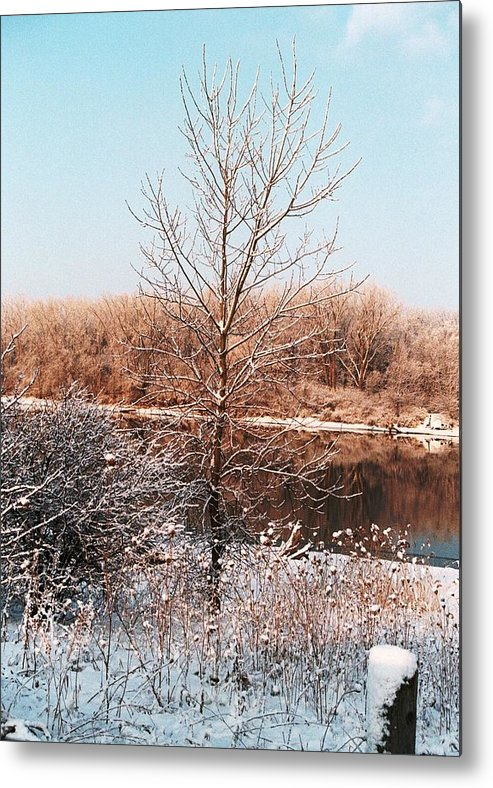 Tree Metal Print featuring the photograph The Colors Of Winter by Jennifer Englehardt