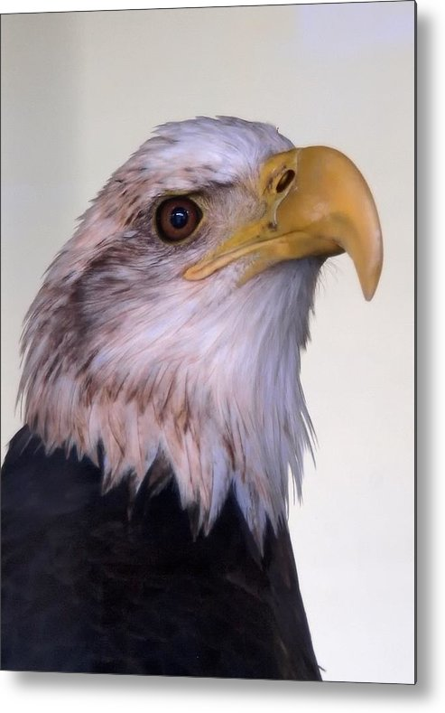 Ann Keisling Metal Print featuring the photograph The Eagle by Ann Keisling