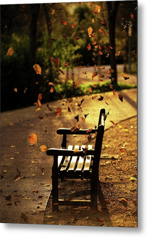 Fall Leaves On Park Bench Metal Print