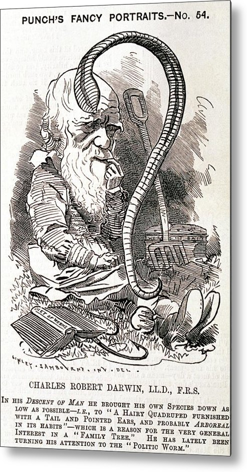 Charles Darwin Metal Print featuring the photograph Darwin Caricature by George Bernard/science Photo Library