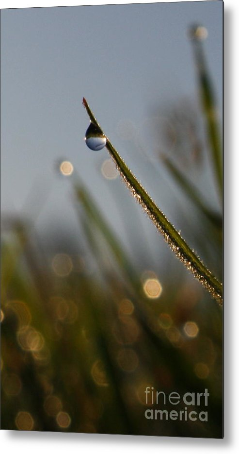 Grass Metal Print featuring the photograph Right Side Down by Laura Horgan