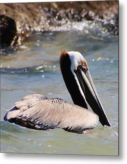 Bird Metal Print featuring the photograph Brown Pelican by Bruce Bley