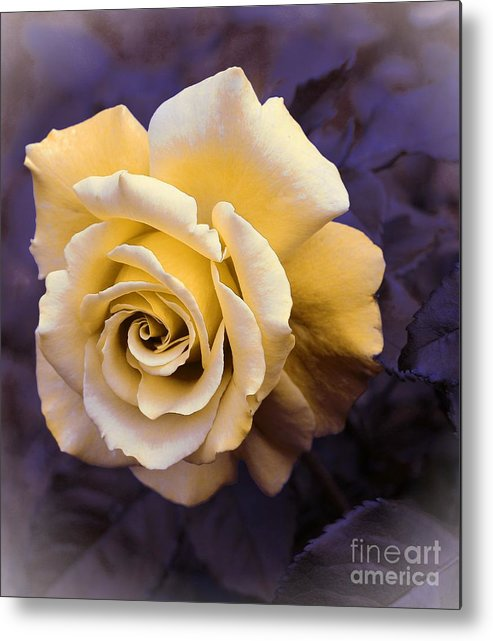Pale Yellow Rose Metal Print featuring the photograph Pale Yellow Rose by Barbara Griffin