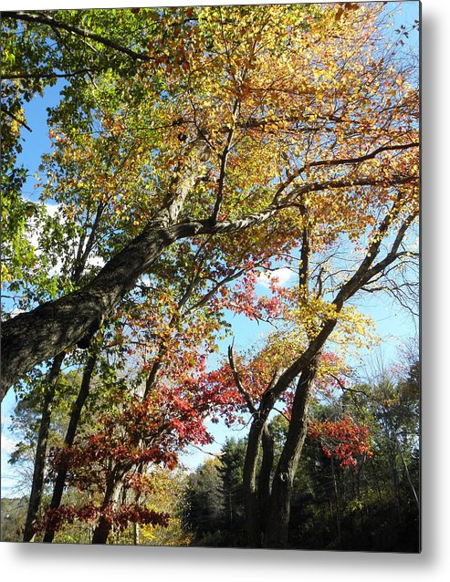 Fall Metal Print featuring the photograph a rainbow of colors in CT by Kim Galluzzo Wozniak