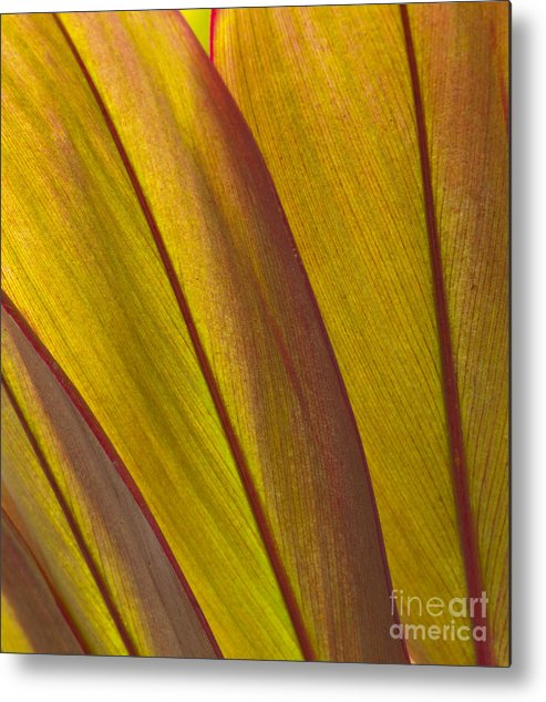 Bronstein Metal Print featuring the photograph Leaf Patterns by Sandra Bronstein