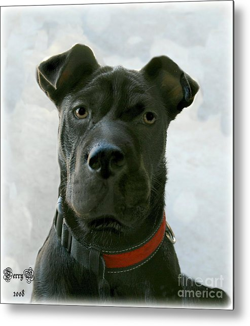Dog Metal Print featuring the digital art Ms. Raisin by Terry Burgess
