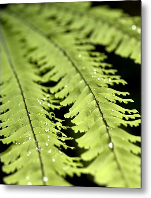 Ferns Metal Print featuring the photograph Fern by Jessica Wakefield