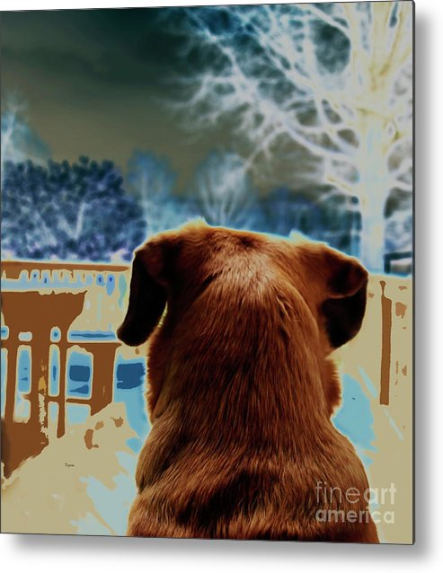 Dogs Metal Print featuring the photograph From Her Perspective  by Steven Digman