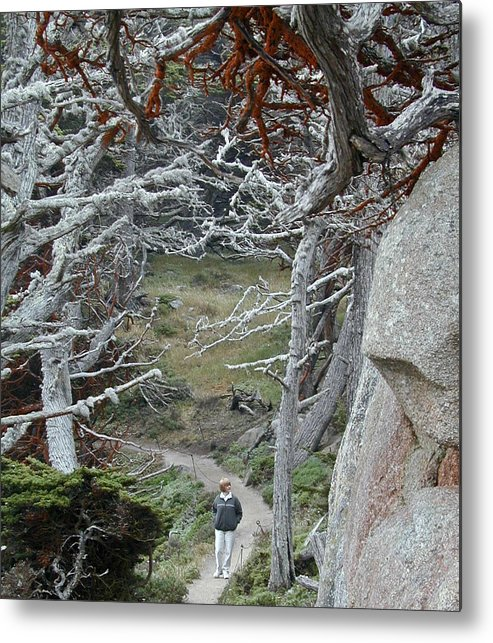 Lichens Metal Print featuring the photograph Ghost Trees by Douglas Barnett