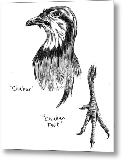 Chukar Metal Print featuring the drawing Head And Foot Of A Chukar by Kevin Callahan