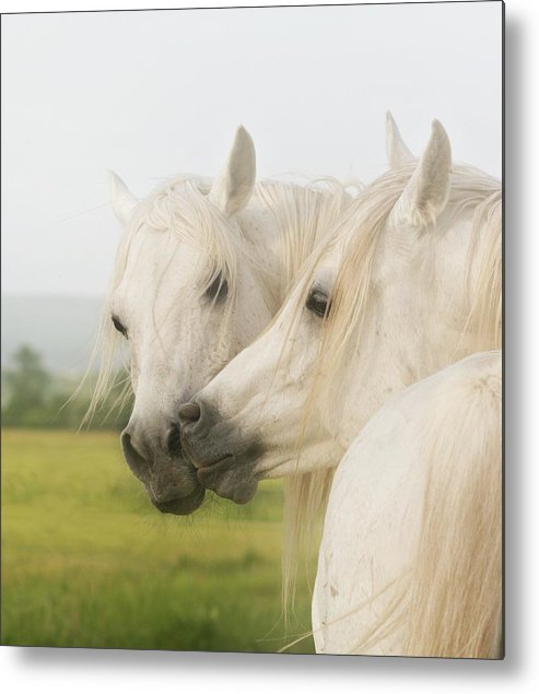 Horse Metal Print featuring the photograph Horse Kiss by ELA-EquusArt