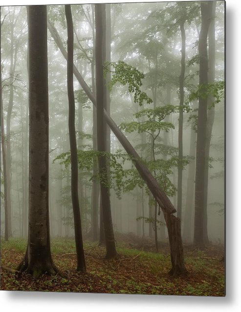 Beech Metal Print featuring the photograph Old Beech Forest by Evgeni Dinev