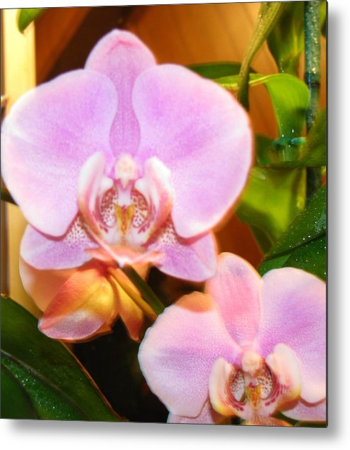 Flower Metal Print featuring the photograph Orchid Bloom by Gloria Byler