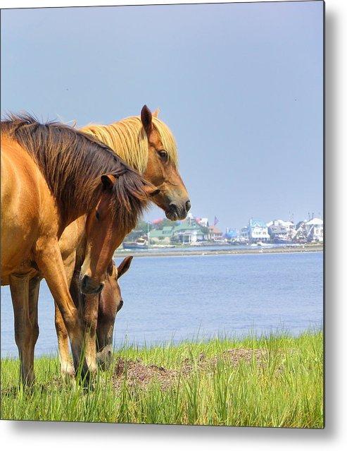Assateaque Metal Print featuring the photograph Wild Horses Of Assateaque by Scott Rhoads