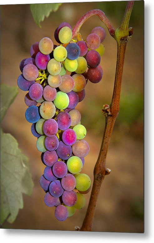 Grapes Metal Print featuring the photograph Jewel Tones by Jean Noren