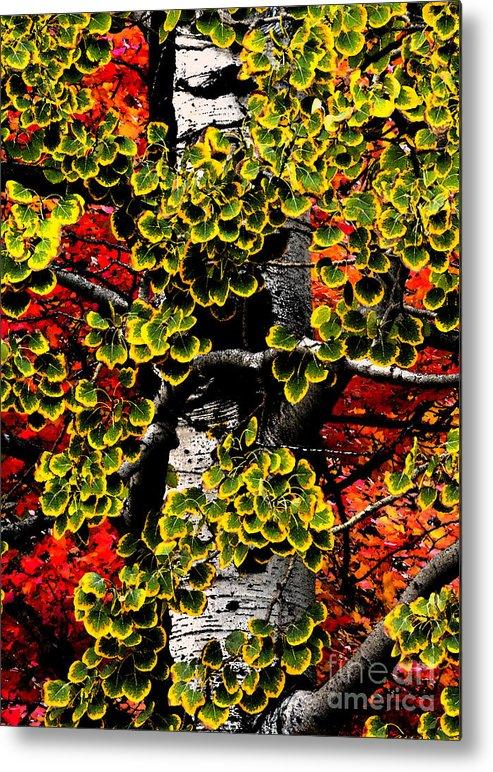Closeup Metal Print featuring the photograph Fall Birch Leaves by Lane Erickson