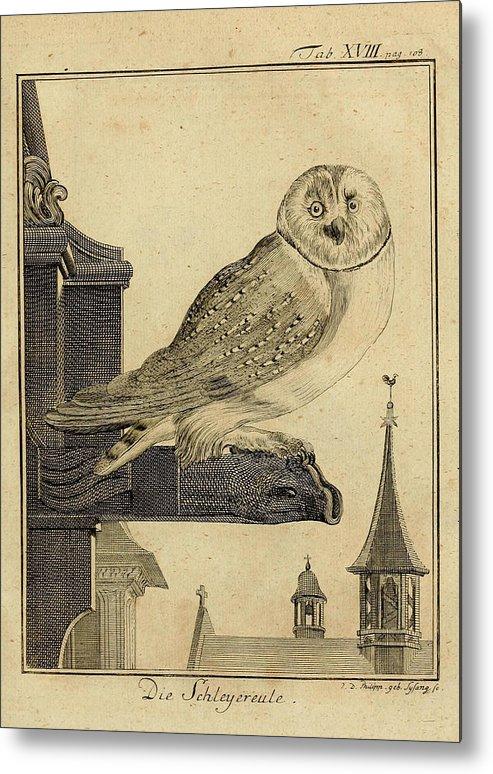 Die Metal Print featuring the drawing Die Schleyer Eule by Philip Ralley