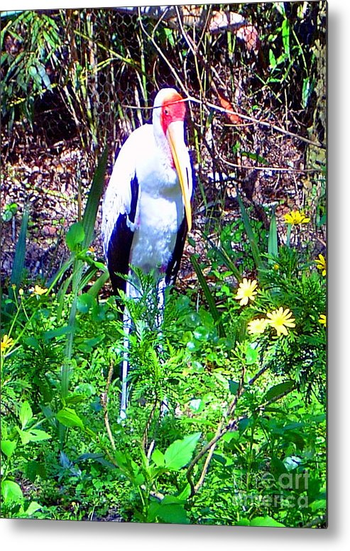 Bird Metal Print featuring the photograph Lonely Bird by Heather Morris