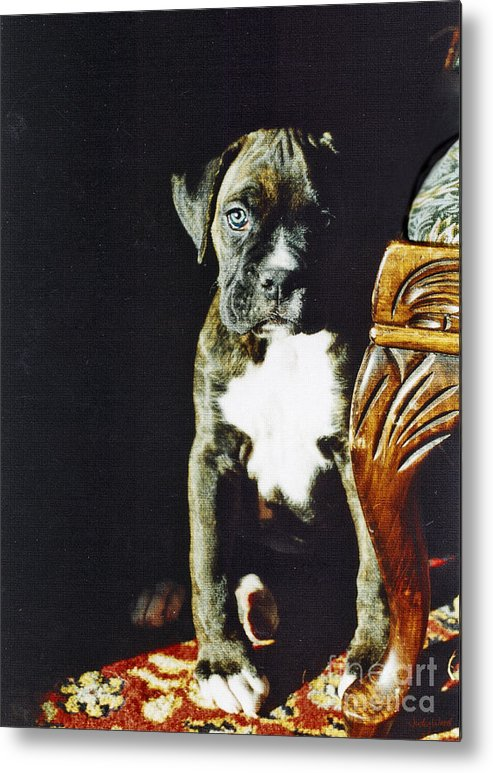 Boxer Dog Metal Print featuring the digital art New To The World by Judy Wood