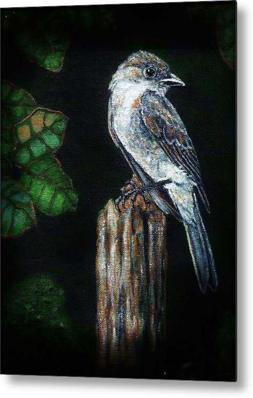 Bird Metal Print featuring the painting Phoebe Drama by VLee Watson
