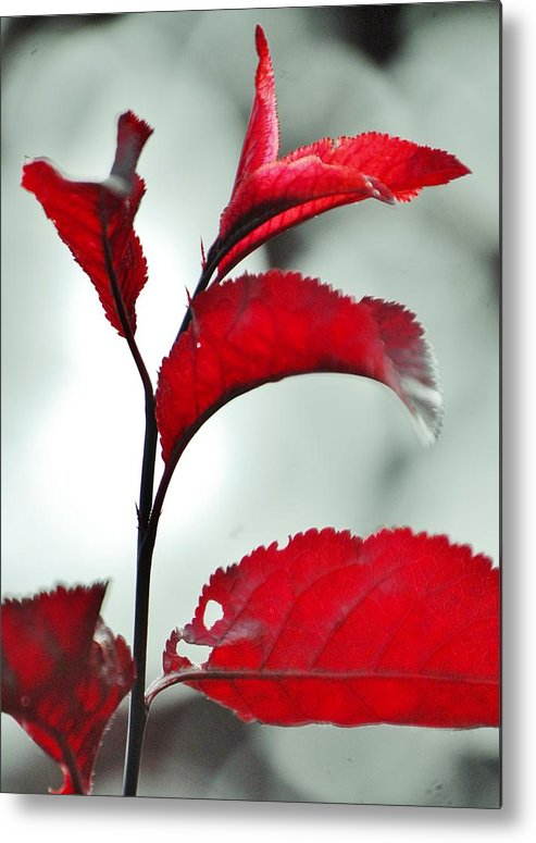 Nature Metal Print featuring the photograph Seedling by Aimee Beauvais