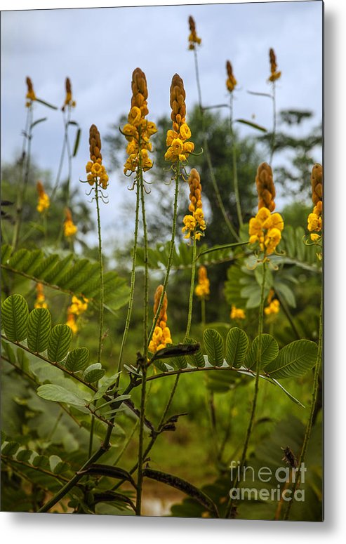 Yellow Metal Print featuring the photograph Tropical Plants by Gina Koch